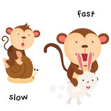 Opposite slow and fast illustration Royalty Free Stock Image