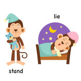 Opposite  stand and lie Stock Photos