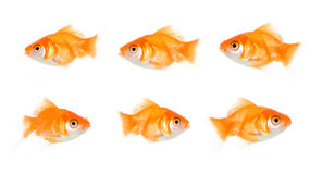 Opposite ways. Bunch of fish heading in opposite ways isolated on white royalty free stock photo
