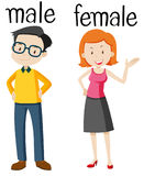 Opposite wordcard for male and female. Illustration Royalty Free Stock Image