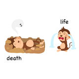 Opposite words death and life vector Stock Images