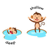 Opposite words deep and shallow vector Stock Photo