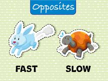 Opposite words for fast and slow. Illustration Stock Photo