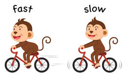 Opposite words fast and slow vector Royalty Free Stock Photo