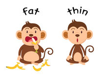 Opposite words fat and thin. Vector illustration Royalty Free Stock Photography
