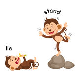 Opposite words lie and stand vector. Illustration Stock Photography