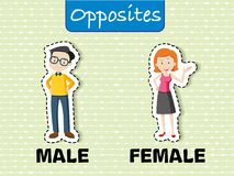 Opposite words for male and female. Illustration Stock Photography