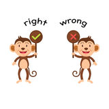 Opposite words right and wrong vector Royalty Free Stock Photos