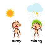 Opposite words sunny and raining vector Royalty Free Stock Photo