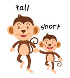 Opposite words tall and short Royalty Free Stock Photo