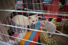 Opposites attract. Cat in the cage at exhibition Royalty Free Stock Photos