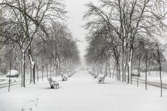 Opróżnia ławki coverd śniegiem na bulwarze Obrazy Royalty Free