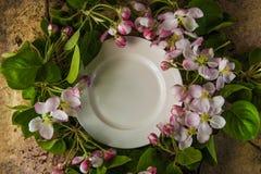 Opróżnia bielu talerza z wiosny okwitnięcia gałąź jabłoń wierzchołek Obrazy Royalty Free