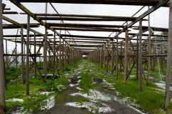 Opróżnia drewnianą sztokfisz strukturę z małymi solankowymi stosami na zieleni ziemi Zdjęcie Stock