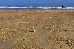 Opróżnia plażę z skorupami i mężczyzna Fotografia Royalty Free