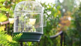 Opróżnia ptasiej klatki ogródu hd zbiory wideo