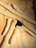Opróżnia rzędy honeycomb Zdjęcie Stock