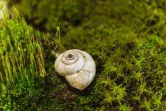 Opróżnia skorupę rzeczny ślimaczka lying on the beach na zielonym mech Obrazy Royalty Free