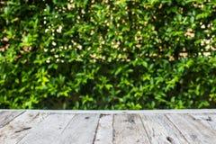 Opróżnia stół i świeżego zielonego tło Obraz Stock