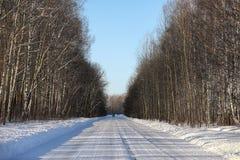 Opróżnia wiejską drogę w lesie w zima dniu Zdjęcie Royalty Free