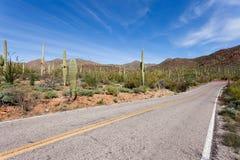 Opróżniam brukował drogę w Saguaro NP blisko Tucson AZ USA Obrazy Royalty Free