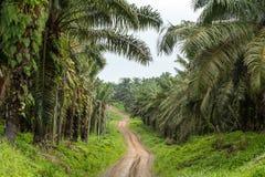 Opróżnia droga oleju palmowego drzewa plantacje though Zdjęcia Stock