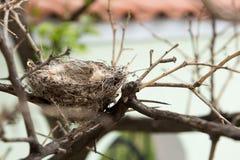 Opróżnia gniazdeczko w drzewie Obraz Royalty Free