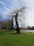 Opróżnia parka w sezonie jesiennym Obraz Stock