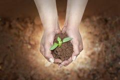 Oprócz rośliien, oprócz ziemskiego pojęcia fotografia stock