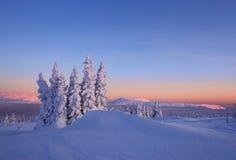 Oprawiający las jest w górach Północny Ural Obraz Royalty Free