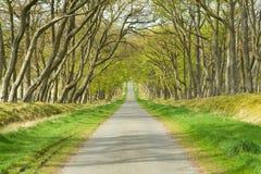 Oprijlaan, weg, aandrijving, brede rijweg met mooi aangelegd landschap Stock Foto's