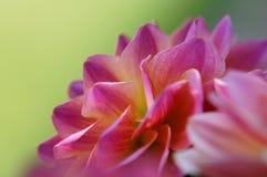 Opromieniony kwiat Makro- Zdjęcia Royalty Free