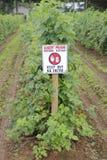 Opryskiwanie uprawy z substancjami chemicznymi Obraz Royalty Free