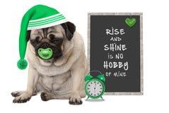 Opstaand in vroege ochtend, nemen de knorrige pug puppyhond met slaap GLB, de wekker en het teken met tekst toe en glanzen zijn g Stock Foto's