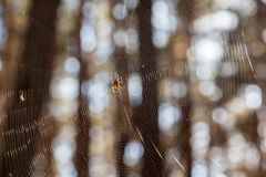 Dispersion of sunlight by cobweb Royalty Free Stock Photo