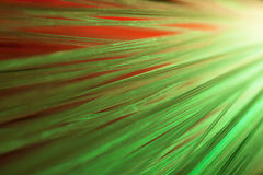 Optical fibers Royalty Free Stock Photography