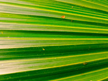 Optical illusion English leaf. Bright clean close-up of leaf with affect of narrowing towards left Stock Images