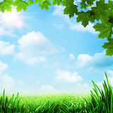 Optimistic meadow. Abstract natural backgrounds Stock Image