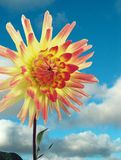 Optimistische bloem Stock Fotografie