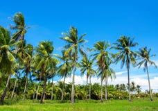 Optimistiskt landskap med cocopalmträd Tropisk natursikt med palmträd royaltyfria bilder