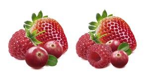 Options de canneberge de framboise de fraise d'isolement sur le backgro blanc Photos libres de droits