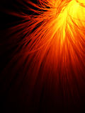 Optique de fibre en rouge d'incendie Photo stock
