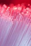 optiska fibrer royaltyfri foto