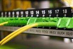 Optiska kablar för fiber, internet, kommunikation, nätverk royaltyfri bild