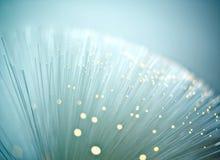 Optiskt för fiber Fotografering för Bildbyråer