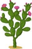 Optunia Kaktus. Vektor Stockbilder