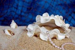 Opulence d'huître photo libre de droits