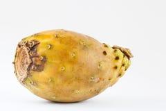 Opuntia τόνου ficus-Indica Στοκ εικόνα με δικαίωμα ελεύθερης χρήσης