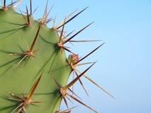 opuntia кактуса стоковая фотография