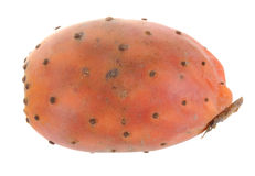 Opuntia Royalty Free Stock Image